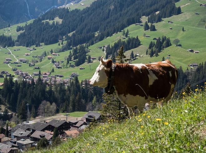 Adelboden-Fruehjahr-2017-05-18-10-1